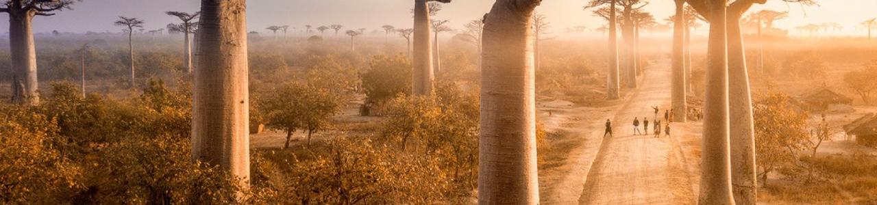 The Baobab Network