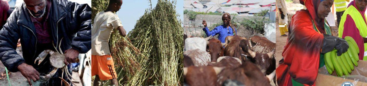 Somalia Growth Enterprise Employment and Livelihoods Program (GEEL)