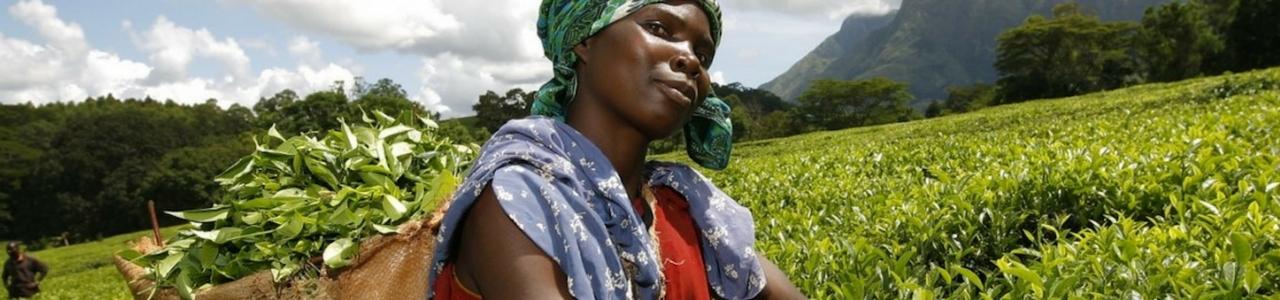 SME Development Programme Uganda