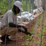 Nordic Horn of Africa Opportunities Fund