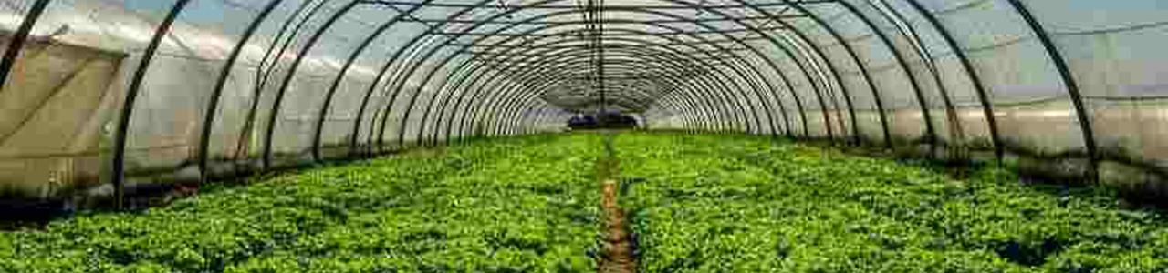 Greenhouse   PEPSICO