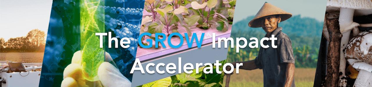 GROW Impact Accelerator 2021