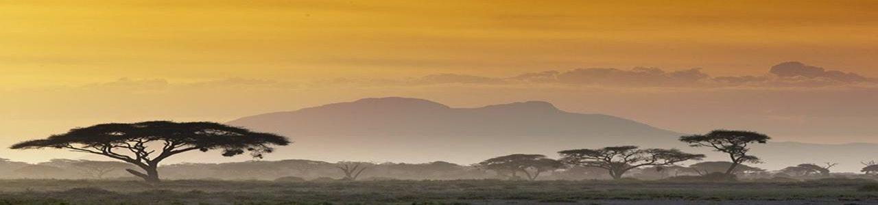 MZZ Africa